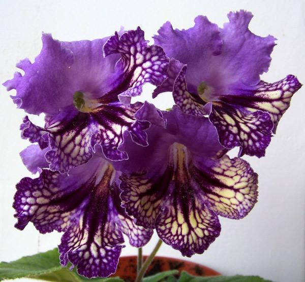Растения комнатные цветы фотографии